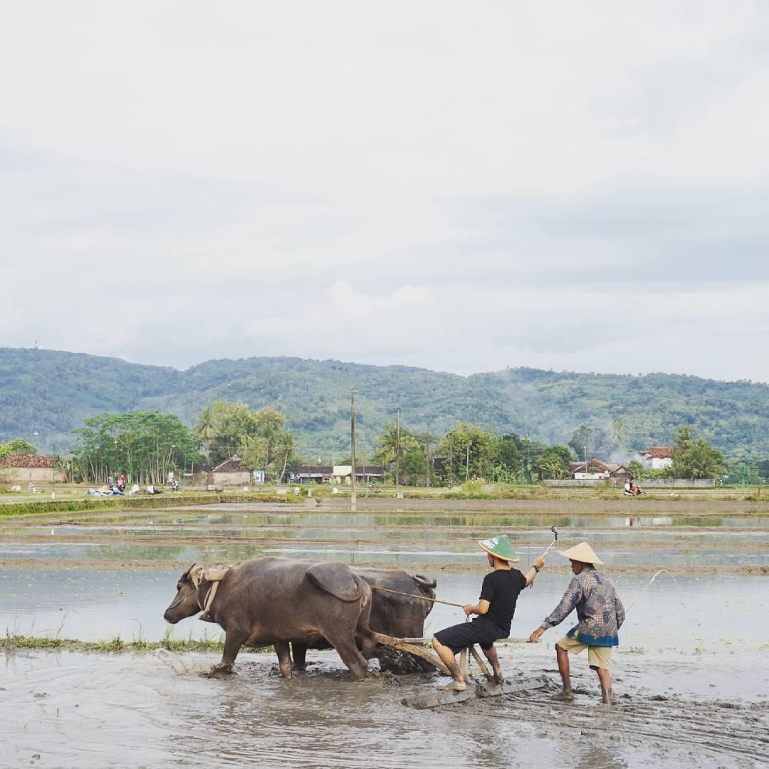 Desa Wisata Kebon Agung