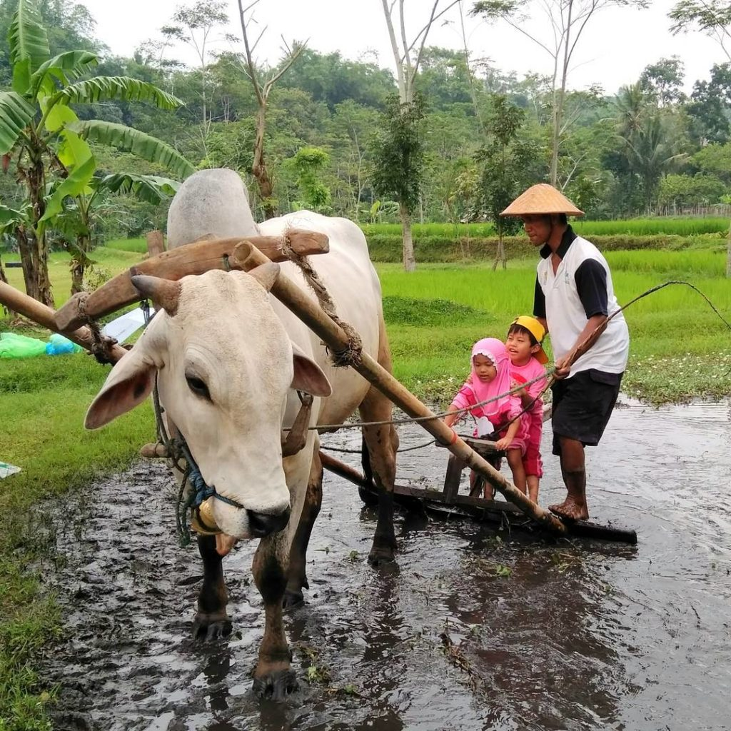 Desa Wisata Ledok Sambi